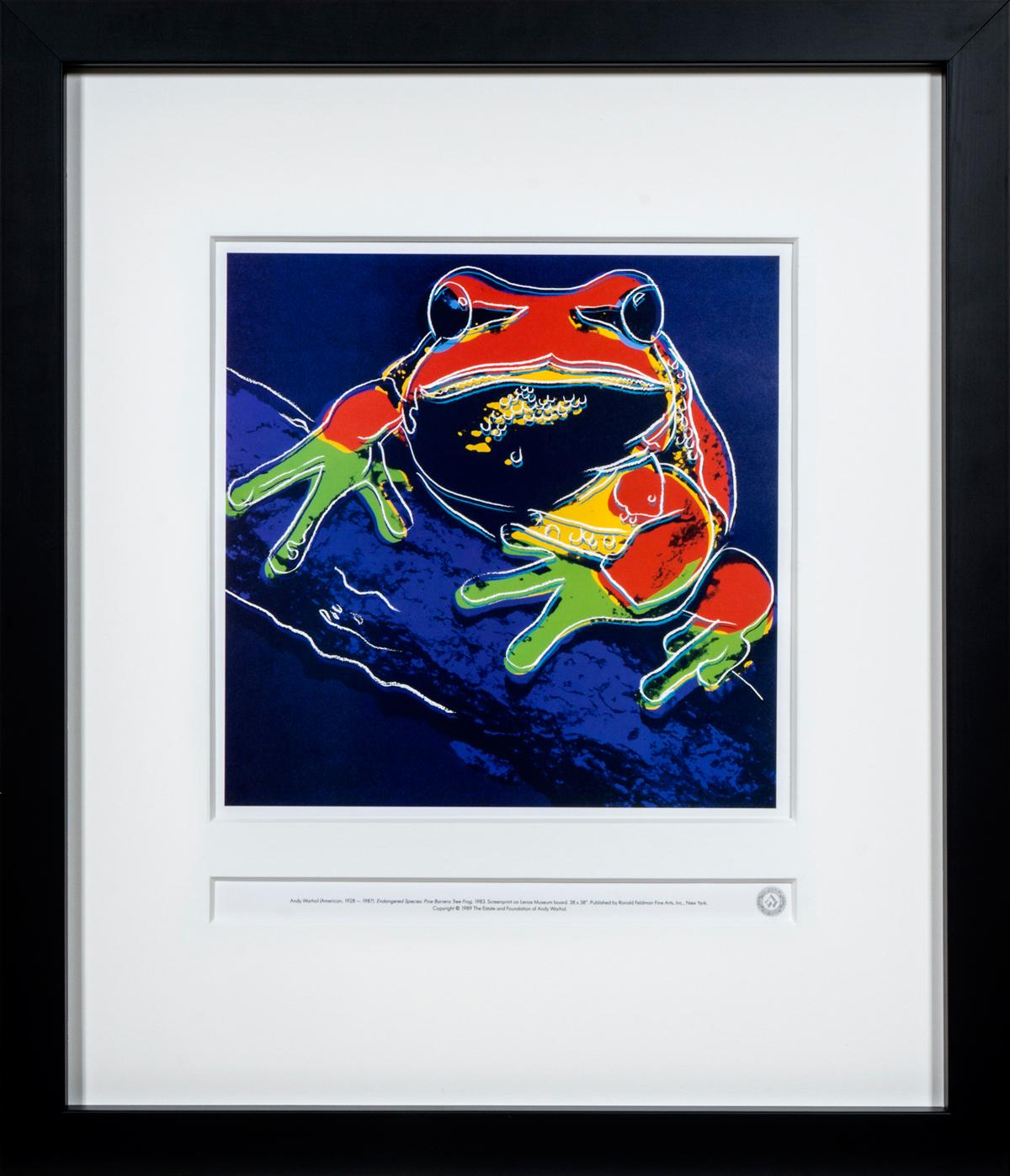 Pine Barrens Tree Frog in frame