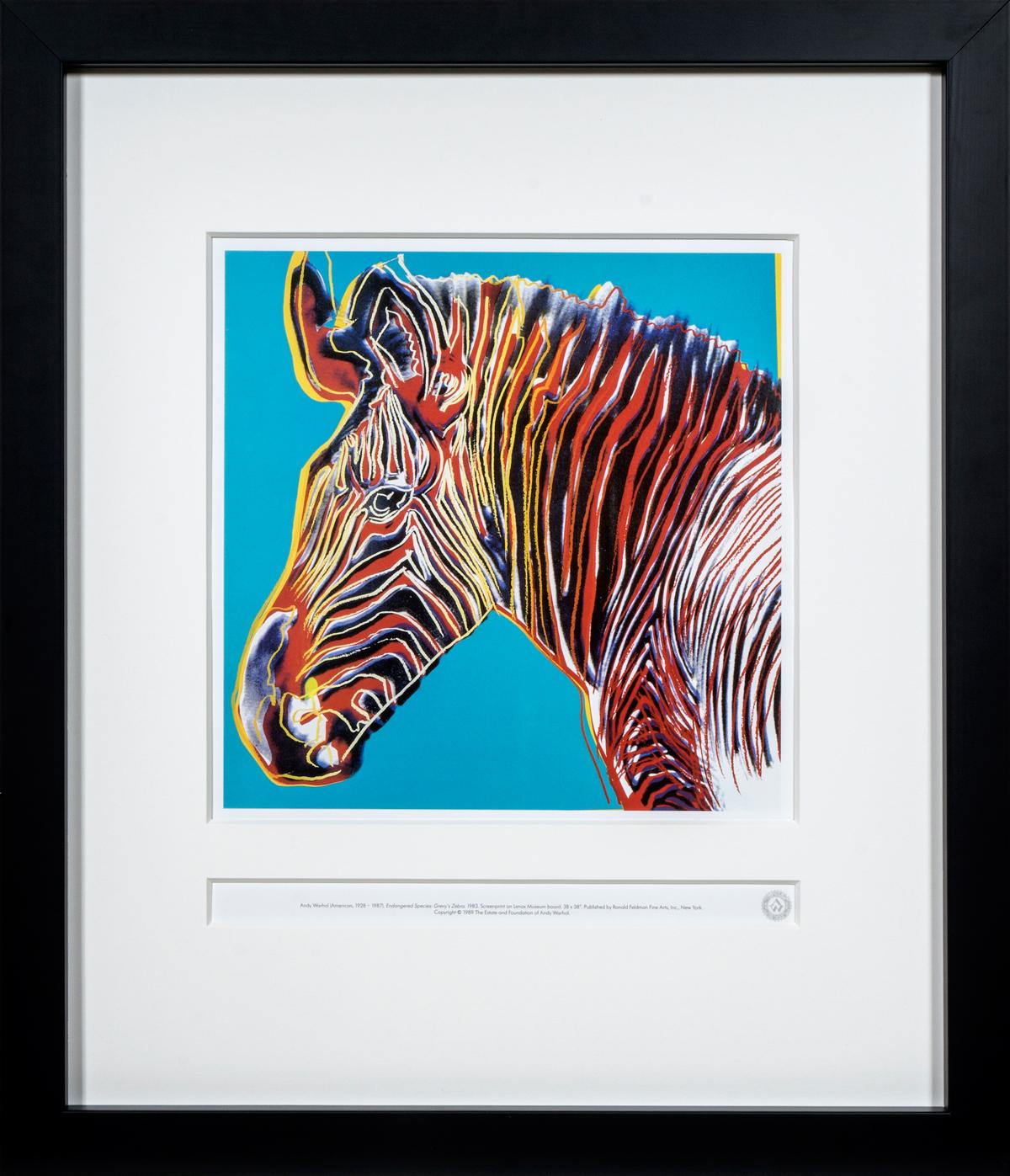 Grevy's Zebra in frame